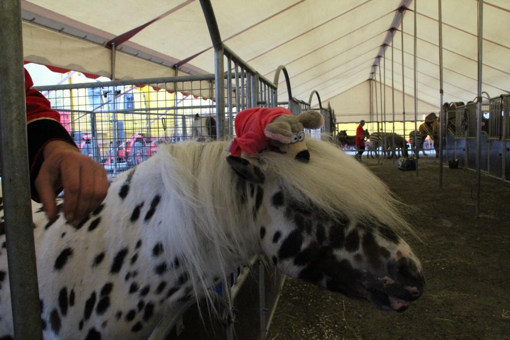 Villevalla prickig häst huvud