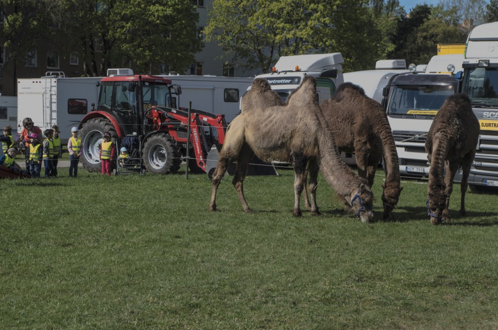 3 kameler